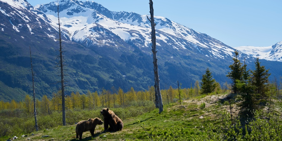 A Tale Of Two Tree Planters: Surviving A Bear Encounter In TheBackcountry