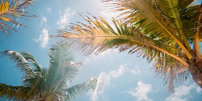 50+ Fun Facts About Florida That Anyone CanAppreciate