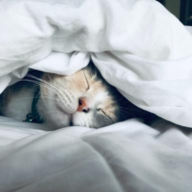 20 Life Lessons Only Cat Owners Will Understand