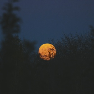green plants under full moon photo