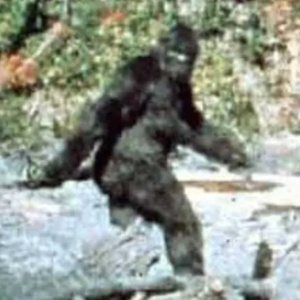 The 10 Best Arguments That Bigfoot Is Real