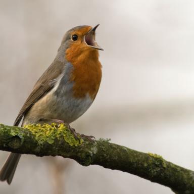 150+ Unique Bird Names for Pets