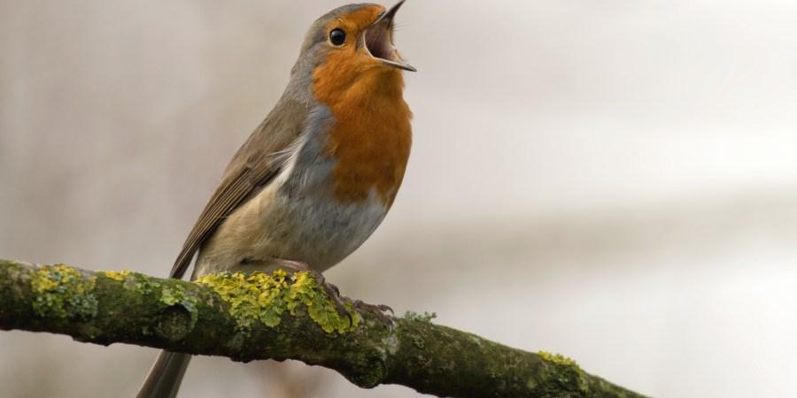 150+ Unique Bird Names forPets