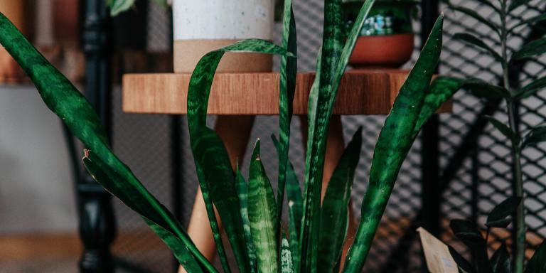 100+ Plant Puns That Will Leaf YouWantingMore