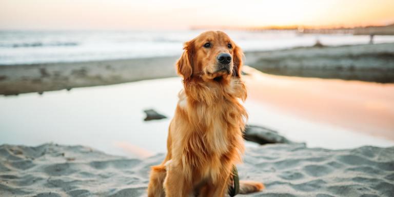 90+ Hilarious Dog Jokes For AnimalLovers