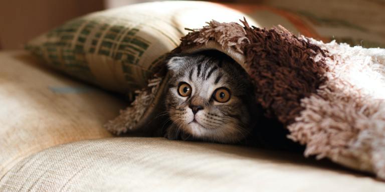 90+ Hilarious Cat Jokes For AnimalLovers