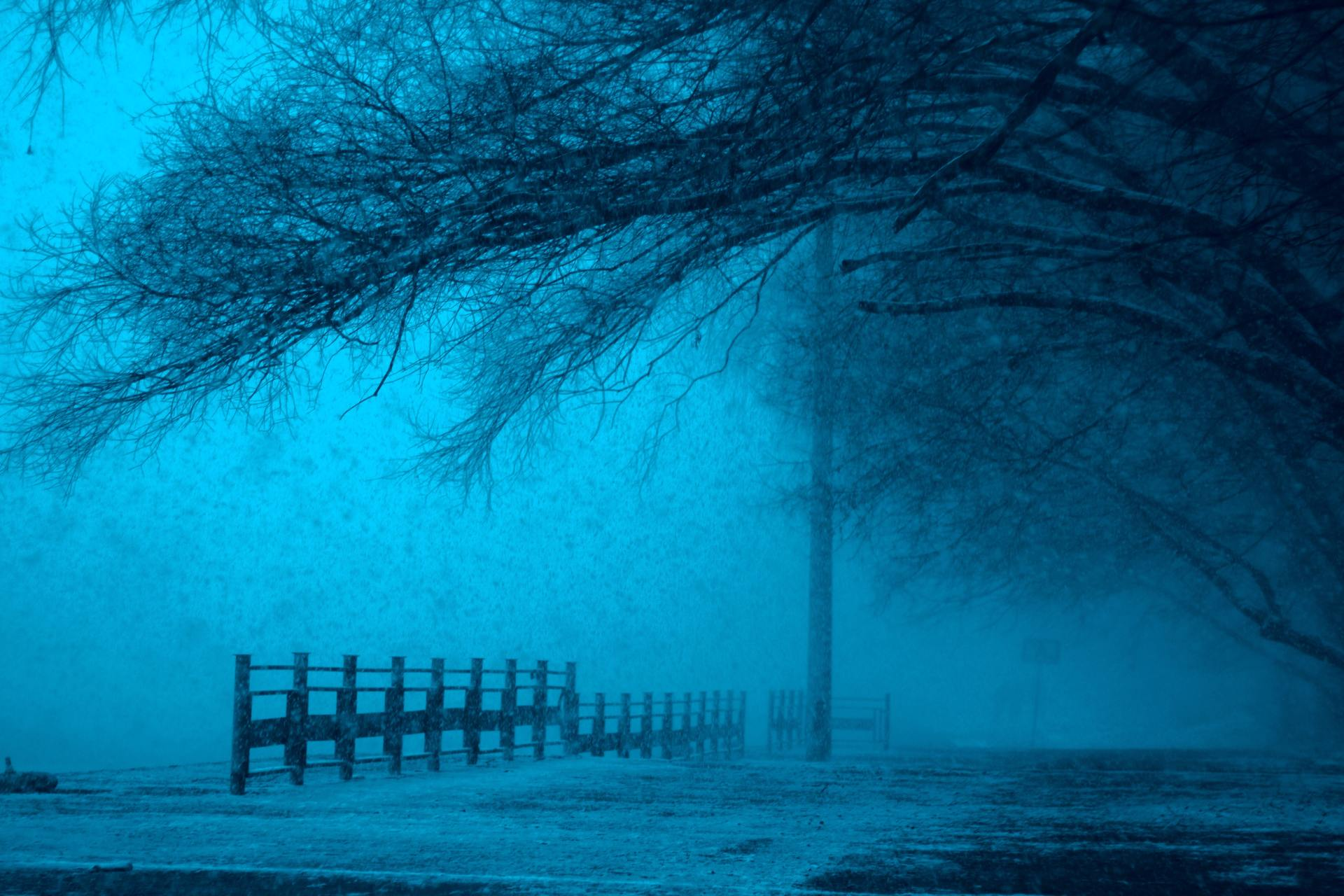 Wooden Fence Under Leafless Tree