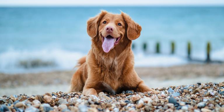 80+ Dog Trivia Questions For AnimalLovers
